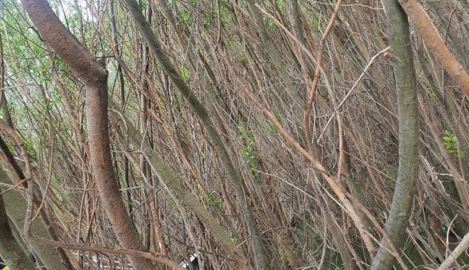 ALERTĂ! Un bărbat a dispărut în Dunăre, este căutat de scafandrii de la ISU Dobrogea - 4maiinecatharsova3-1620112204.jpg
